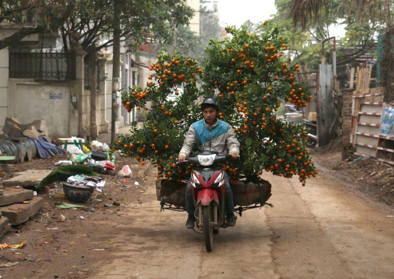 Moto et fleurs