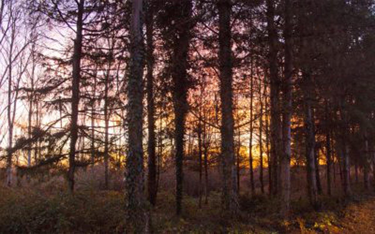 Coucher du soleil en Brenne