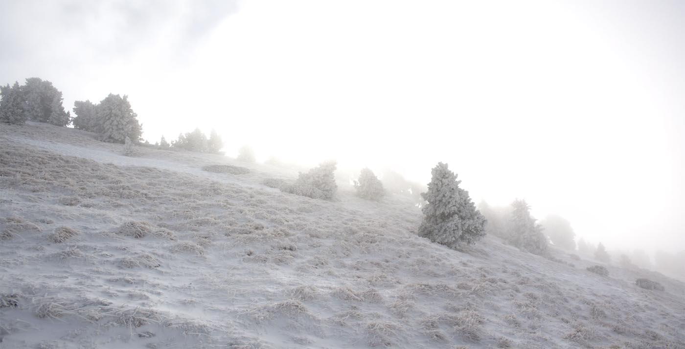 Arbres givrés dans le brouillard sur la pente de Chamechaude