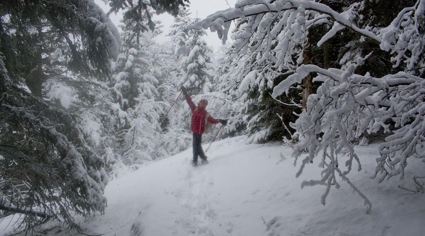 Paysage de neige et forêt en Vercors