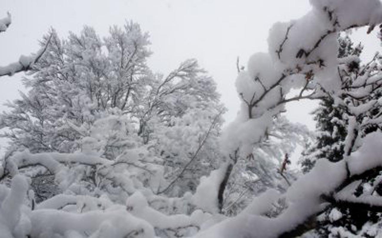 Panoramiques forêt enneigée