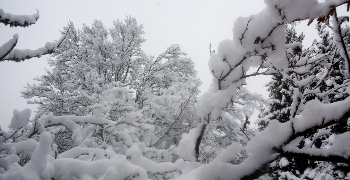 Panoramique arbre enneigé