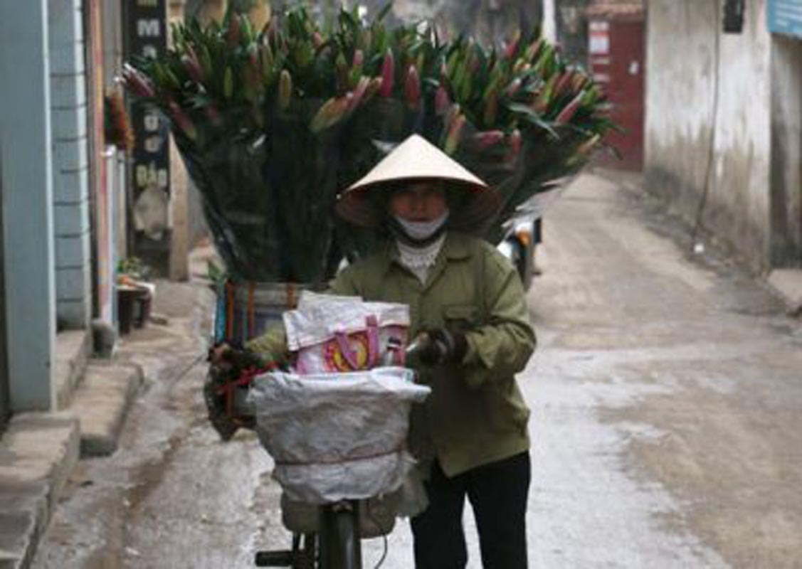 Hanoi flower Tet
