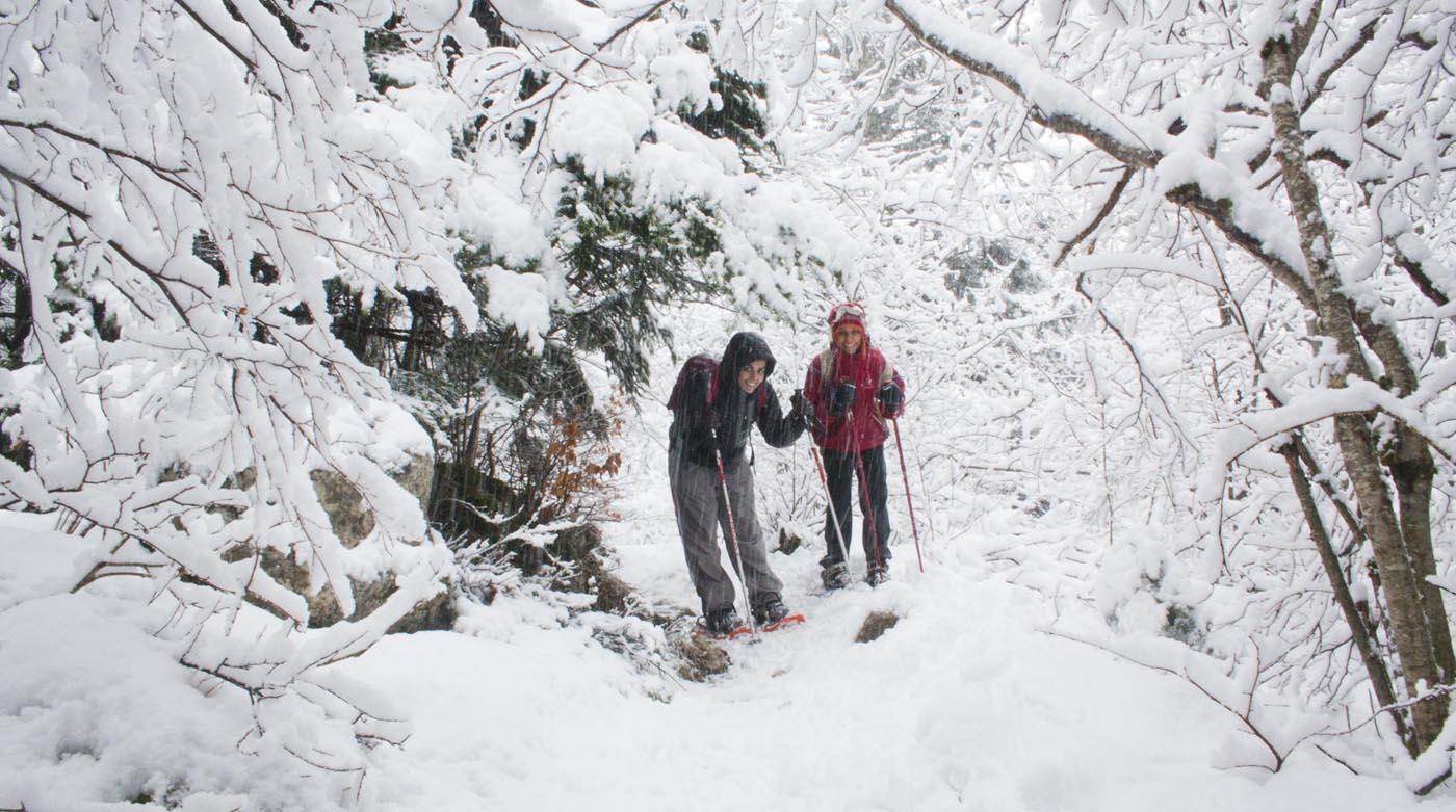 Panoramique dans la forêt enneigée