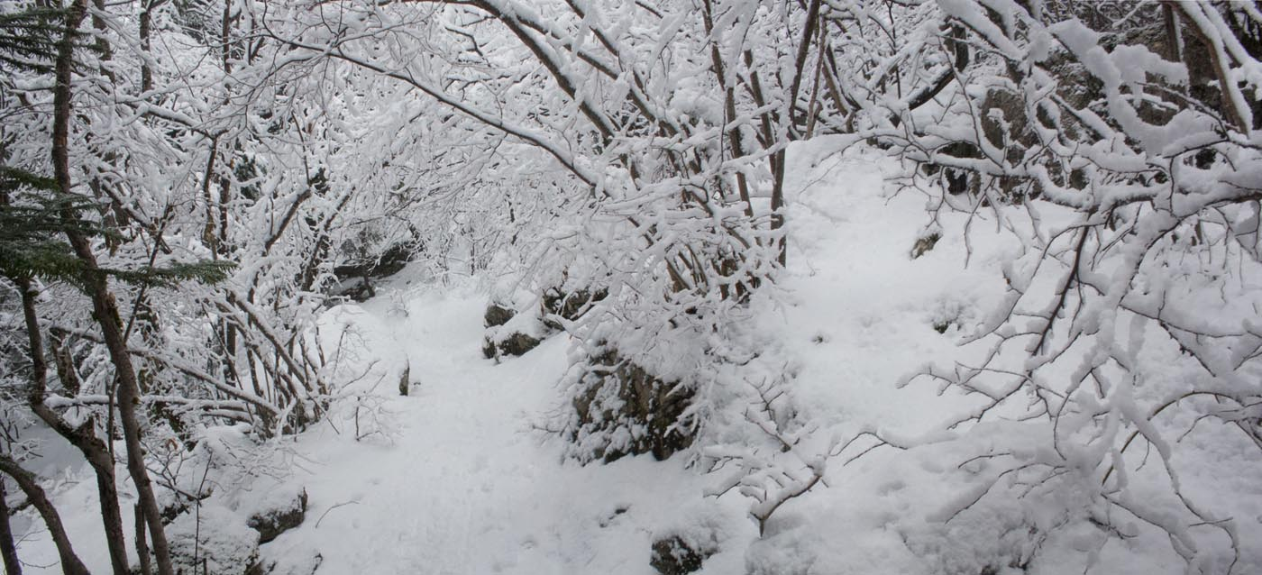 Paysage de neige et forêt
