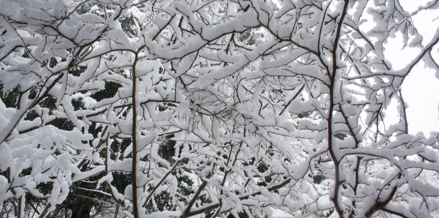 Panoramique branches enneigées