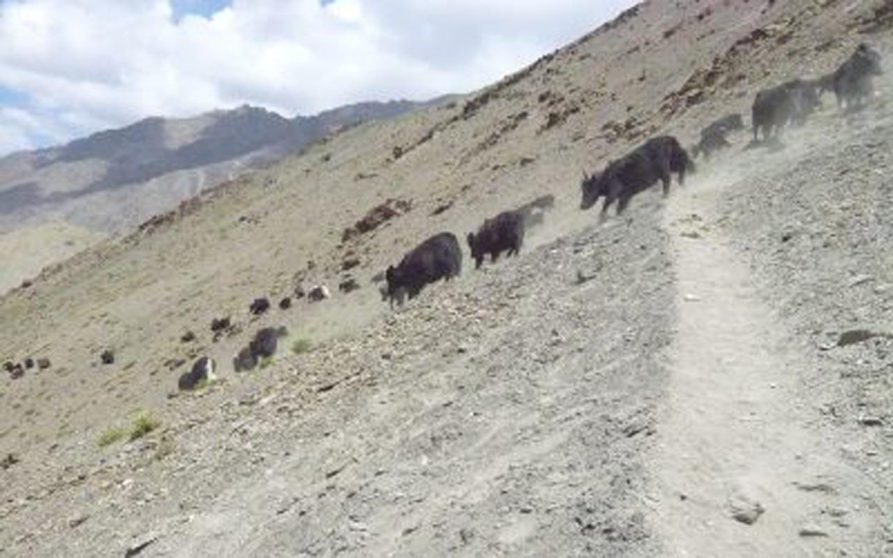 Randonnée au Ladakh – de Konzke La à Sumda Chenmo / Partie 3