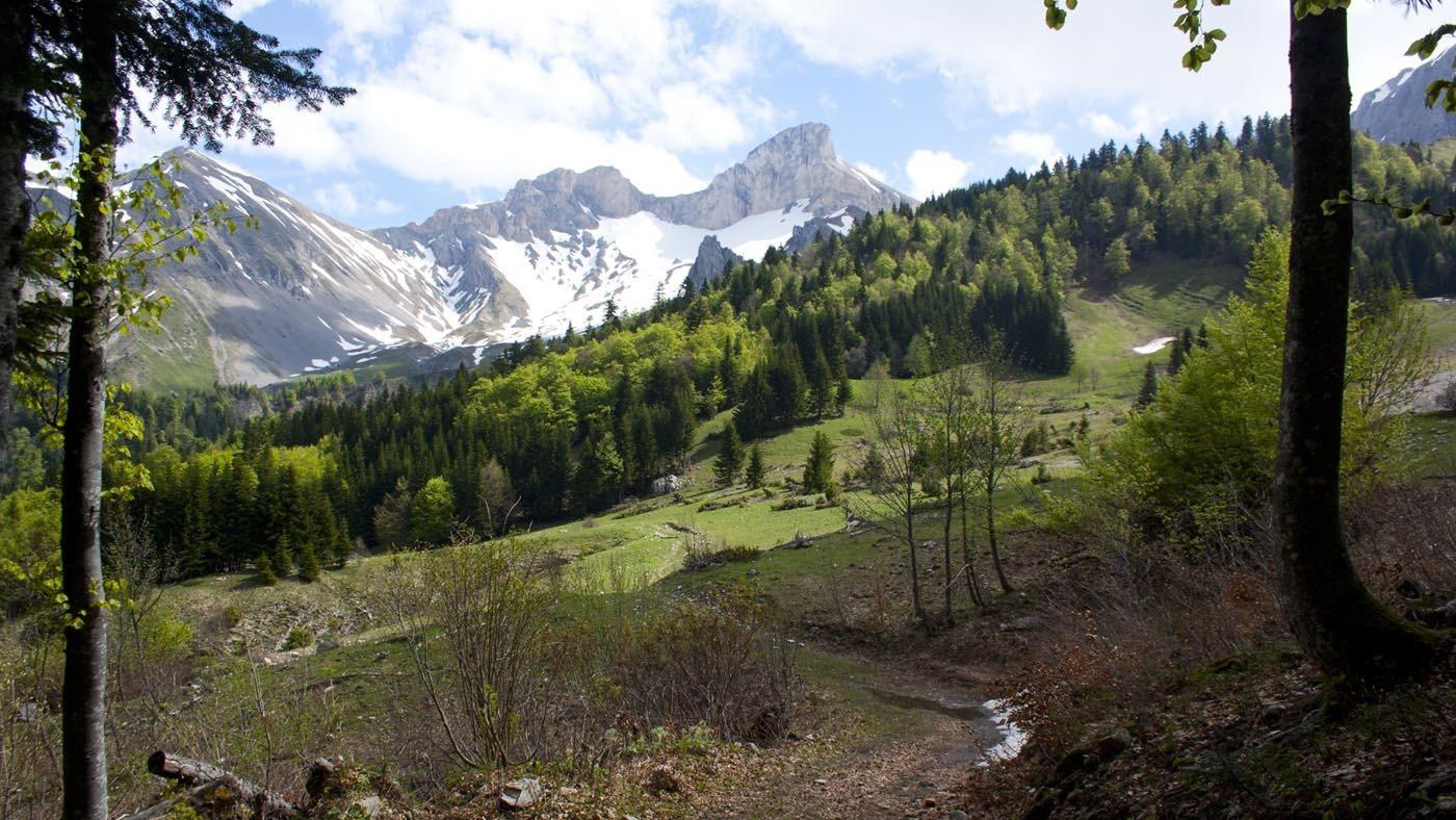 le vallon de la Jarjatte